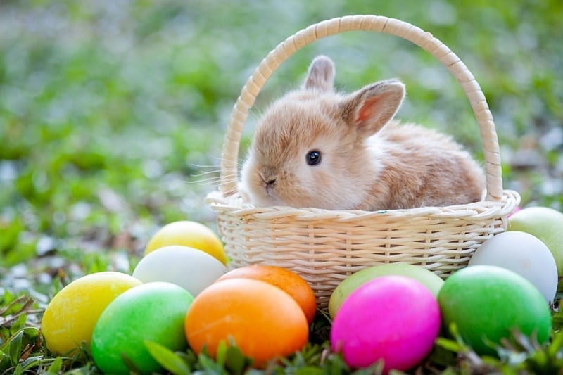 Easter-Header-FEATURED